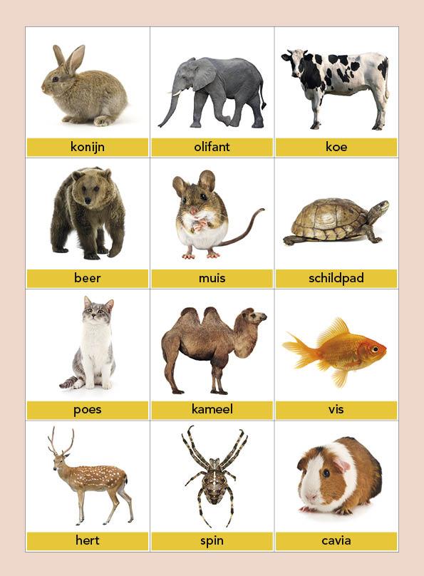 Dierenkaartjes