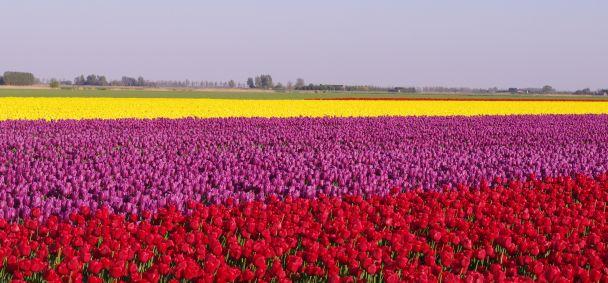 Bloemen, bollen en boeren