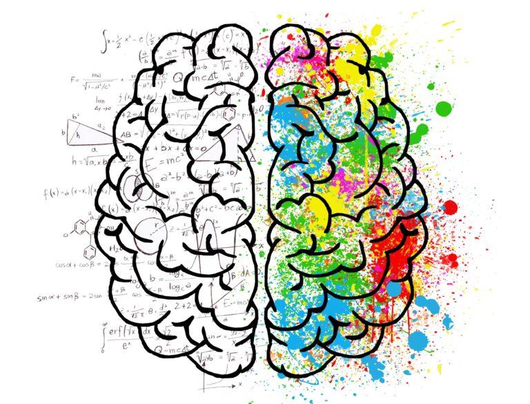 Het jonge brein