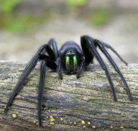 De spin met tien poten
