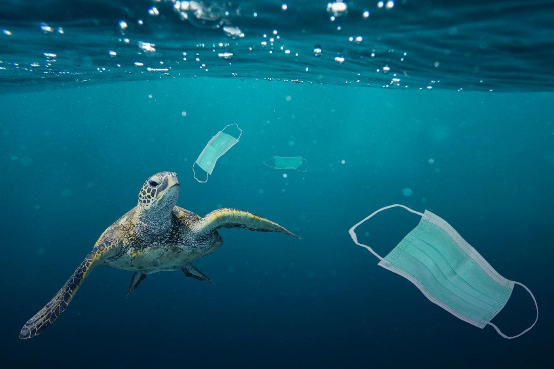 Engels actueel Malmberg schildpad mondmaskers zee vervuiling