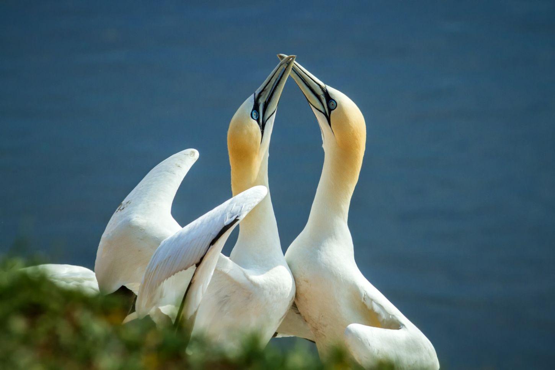 Na Klar Actuele opdracht Malmberg broedende vogels bedreigd