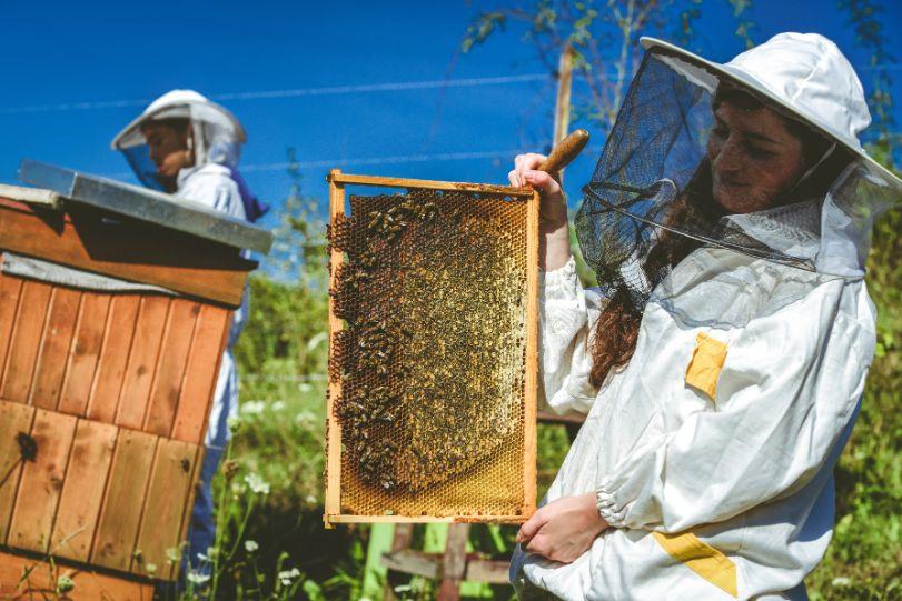 honingraat Engels bijen imker Malmberg Actueel